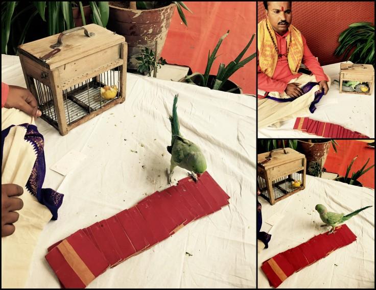 Parrot_Astrologer